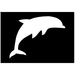 Brushing Dolphin
