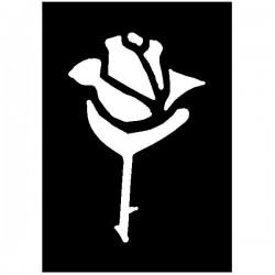 Brushing Rose